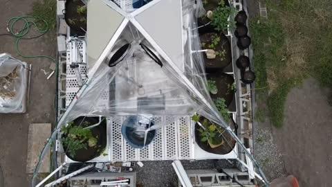 第一次用大疆無人機,拍攝我們家後院的金豆莢(有機生態大棚)