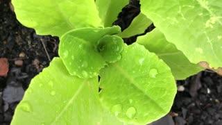 Unbelievable Green plant beautiful growing in my garden