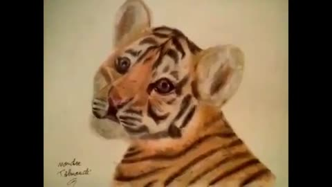 Drawing Baby Tiger Colored
