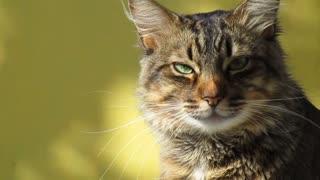 watch this sad, desperate cat