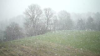 Foggy Snowy