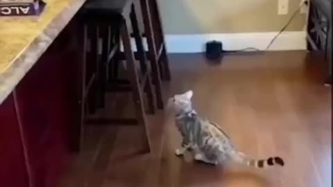 Daily cat video - 17