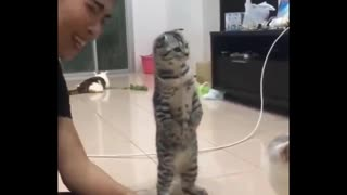 Daily cat video - 9