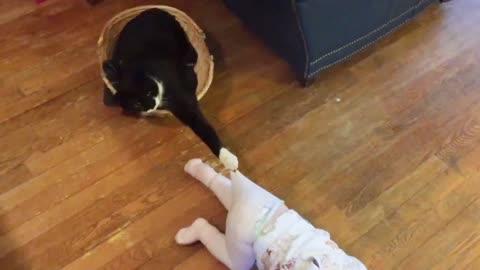 Babys vs cats 😂😂😂🤣🤣🤣
