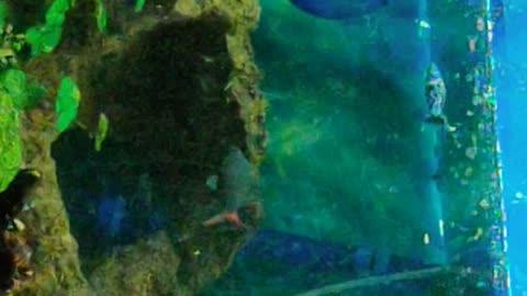 Fish tank fun