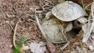Random Turtles