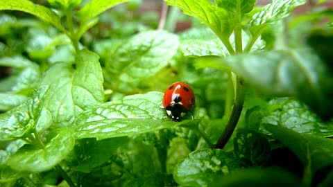 ladybird beautiful mooi