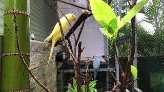 l love Birds