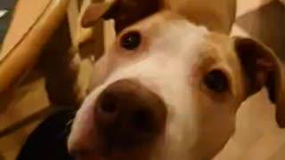 Candy eating dog