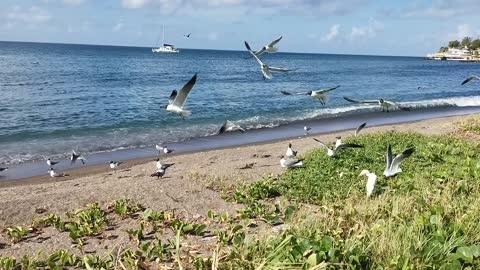 Seabirds gathering on the seashore where food is abundant