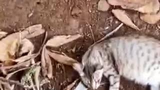 Sleep cat here