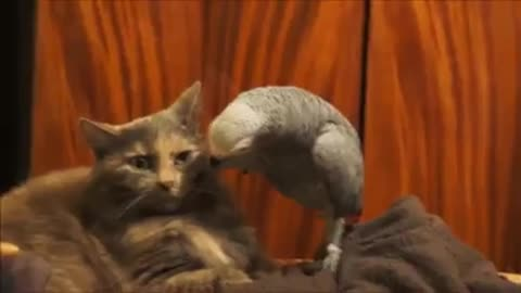 The parrot is joking with his cat friend