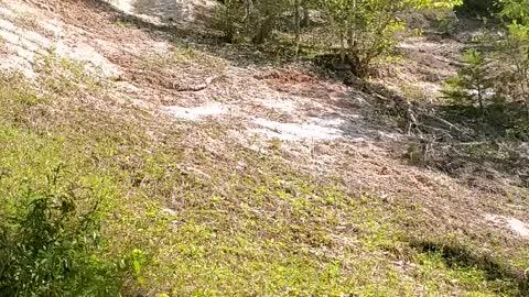 Trail escape