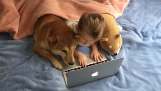 Shiba Inu watches cartoons with human best friend