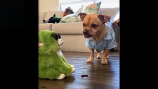 Cute And Funny Pets- Cutest Lands Love Pets