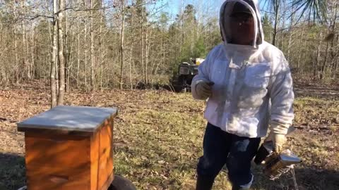 """First Hive Inspection After the 2021 """"Big Texas Freeze"""""""