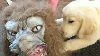 Halloween puppy attack!