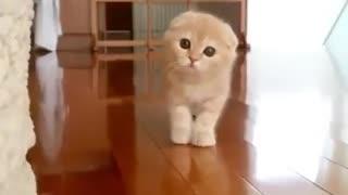 Peekaboo! Kitty