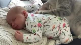 Kitten together with baby.