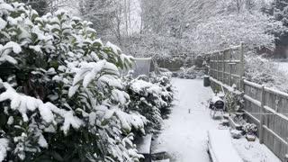 Surprise, Surprise - Snow
