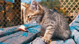 Homeless Cute Kitten Eating In Slow Motion