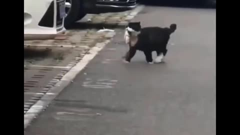 fat cat proud of himself for having a fish