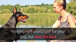 Basic Dog Training – TOP 10 Essential Commands For Every Dog