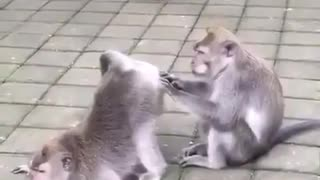 Monkey treasure hunter