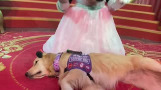 Service Dog Meets Minnie