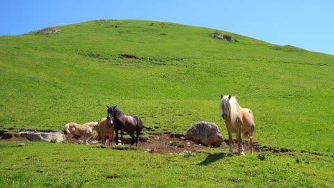 4 Horses Standing Near A Hill