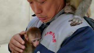 Monkeys like keepers very much