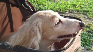 My baby dog lovely
