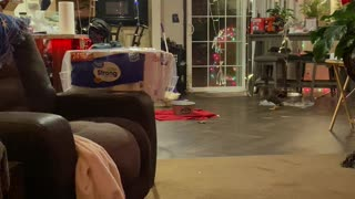 Young Duck Chases Owner Around Kitchen
