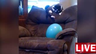 Kat x Balloon 3