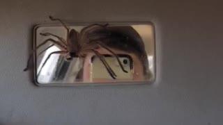 Sun Visor Spider Surprise