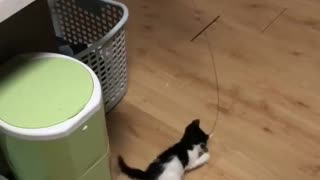 A cat plays with a kitten