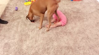 Dogs And Human Babies
