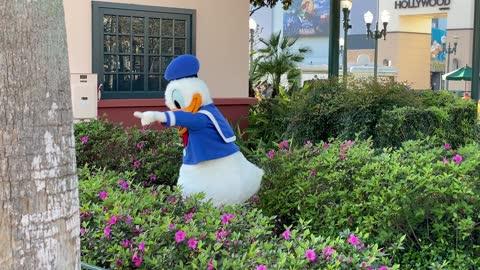 Donald, just being the gardener.
