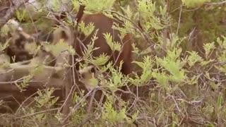 Best attack, wild Epic battles of wild dogs vs Animals