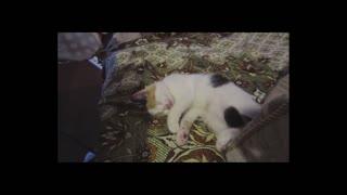 Fanny cat sleep