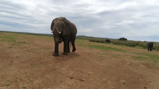 The elephant totally surprises visitors while itching the itch in a magical place