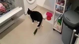 Cats Vs Cucumber Compilation 2021
