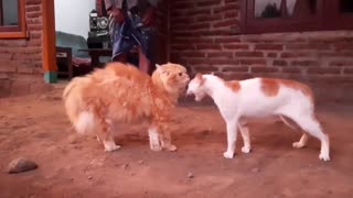 2 cats quietly fighting