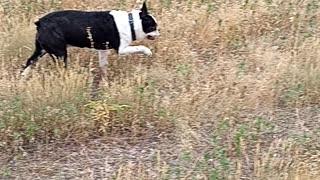 Dopey walking around in high grass