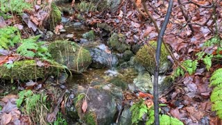 30 Minutes of Running Water Tranquility