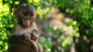 Funny monkey comedy 201