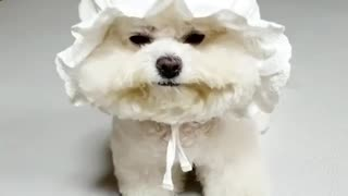 Funny puppy with hat