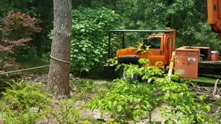 Tree Felling Fail