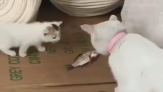 Cat caught fish