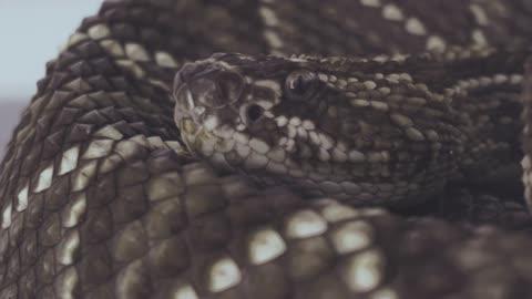 Snkae in Amazon